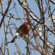 Bird in spring, Denver