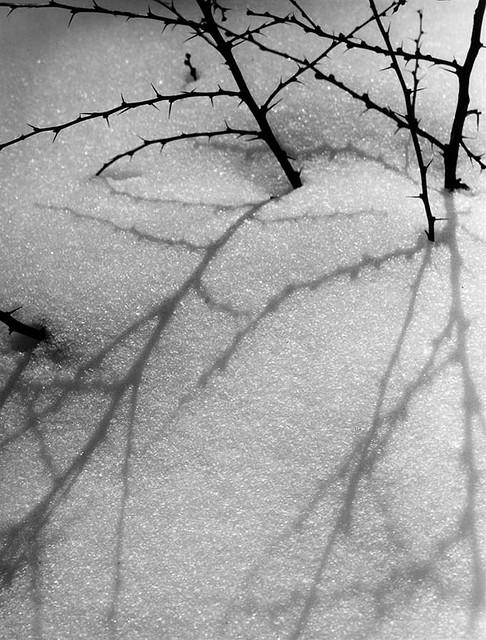 pdf Ecology of Fragmented